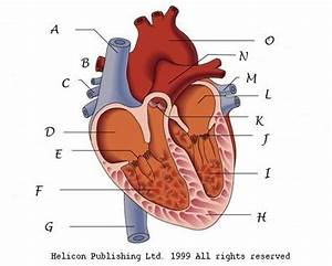Interesting All Parts About Hearts
