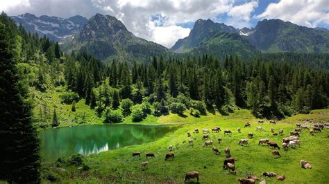 Nature, Landscape, Trees, Forest, Alps, Italy, Water, Lake