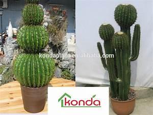 Mini Succulente Pas Cher : plante cactus pas cher ~ Teatrodelosmanantiales.com Idées de Décoration