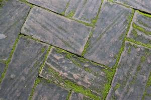 Moos Aus Fugen Entfernen : sauberes pflaster moos von steinen entfernen husmann blog ~ Lizthompson.info Haus und Dekorationen