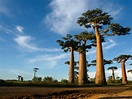 Madagascar - Republic of Madagascar - Country Profile ...
