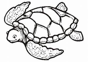 Sea Turtle Outline - Cliparts.co