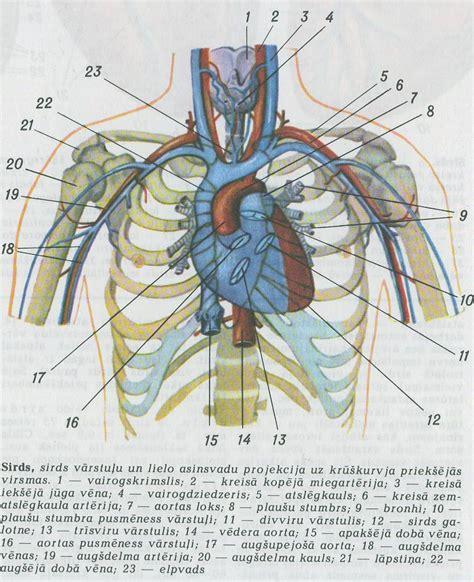 SIRDS | Medicīnas termins