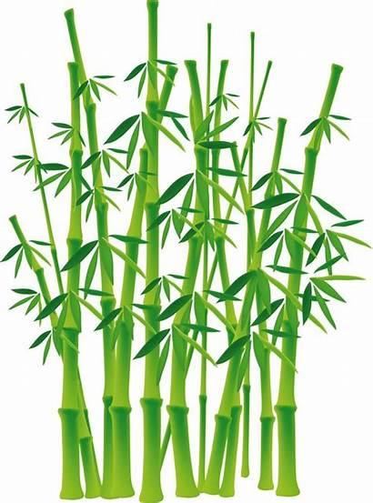 Bamboe Bamboo Bambou Arbre Tree Illustratie Boom