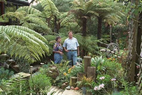 tree ferns horticultural   native plants te ara