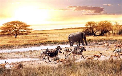 chambre d hotes foix tourisme guide touristique afrique du sud