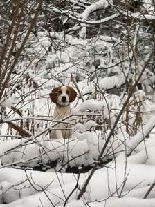 Rabbit hunting | hunting dogs | Pinterest | Rabbit hunting ...