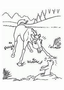 Baby Horse Printable Coloring Pages. Baby. Best Free ...