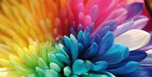 Aus Welchen Farben Mischt Man Lila : welcher weibliche charakter aus victorious bist du ~ Orissabook.com Haus und Dekorationen