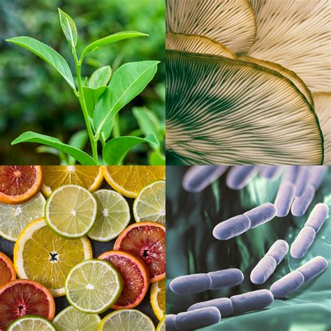 Natural Products Research—Information for Researchers | NCCIH