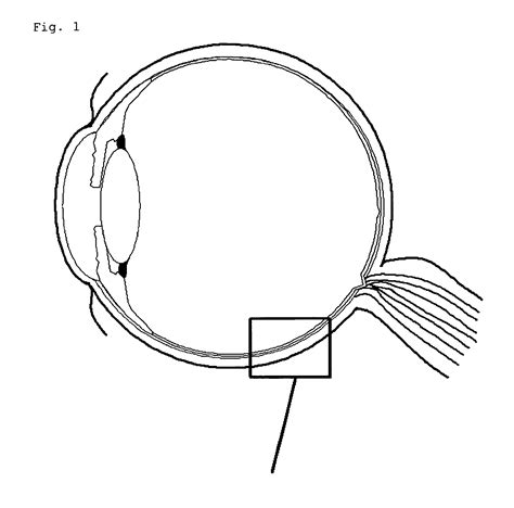 diagram human eye diagram label worksheet