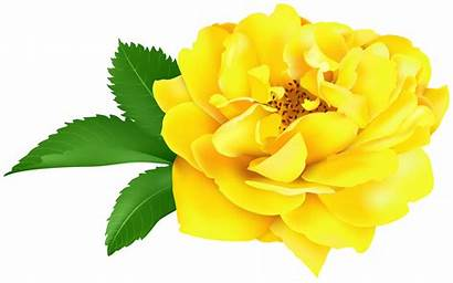Yellow Clip Rose Clipart Roses Transparent Yopriceville