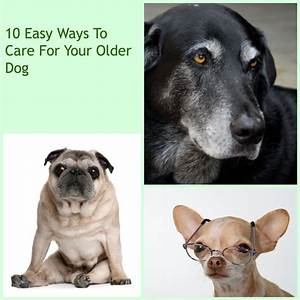 17 best images about older pets on pinterest for dogs With caring for your dog