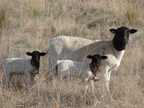 optimale luftfeuchtigkeit in räumen bemark lammers vinniger veekos sa