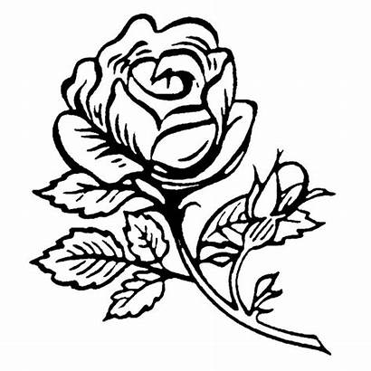 Rose Single Stamp Flower Rubber Coloring Pages