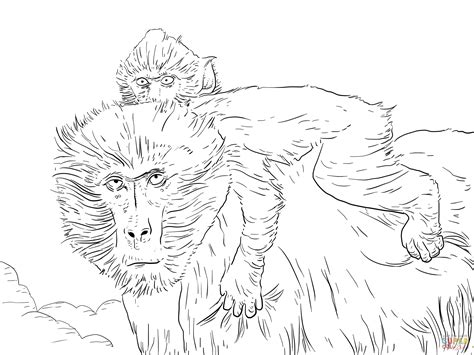 baboon coloring pages   print