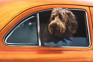 Hundegurt Fürs Auto : premyo produkte von qualit t ~ Kayakingforconservation.com Haus und Dekorationen
