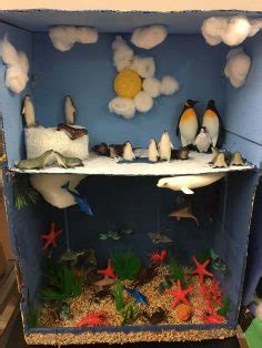 grade ecosystems project
