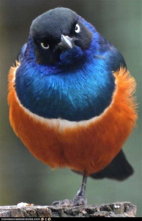 mad bird is mad bird nerd pinterest caramel apples