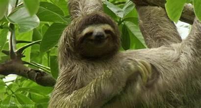 Animal Gifs Cool Awesome Nature Amazing Sloth