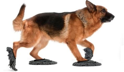 innovative dog products  gadgets