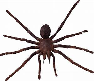 Spider PNG images, free download spider PNG photo pictures ...