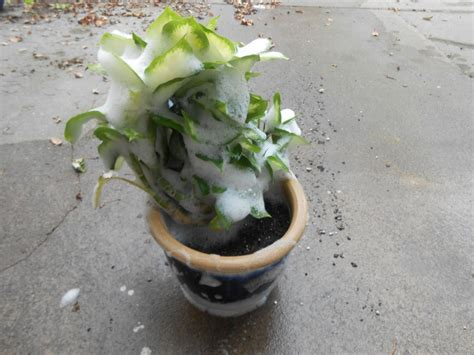 Hometalk   Bring Your Houseplants Inside but Leave the