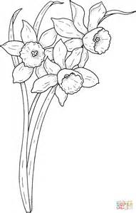 spring narcissus coloring page  printable coloring pages