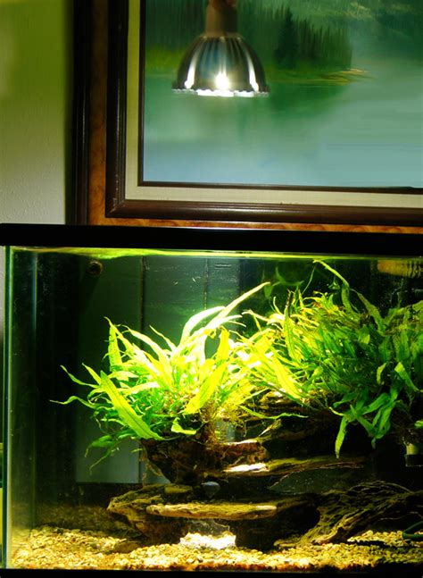 planted aquarium lighting led