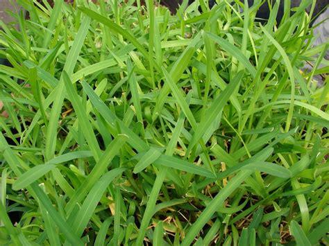 Grass Types That Thrive In Granbury, Tx Lawns