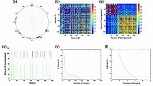 Synchronization Analysis For The Calcium Activity In Fig 2f  The