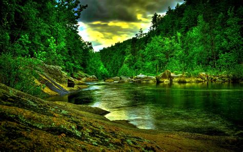 Rainforest Animal Wallpaper - rainforest wallpapers wallpaper cave