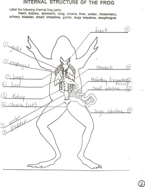 Frog Dissection Worksheet Worksheets For All  Download And Share Worksheets  Free On