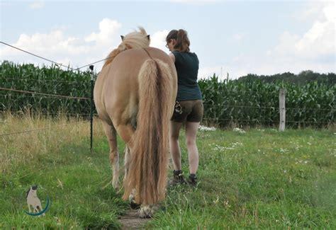 darum ist bodenarbeit mit dem pferd einfach toll  pferd