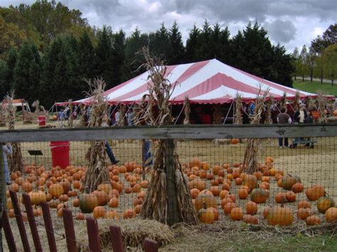 """It's That """"fall Festival"""" Time Of Year Again In Anne"""