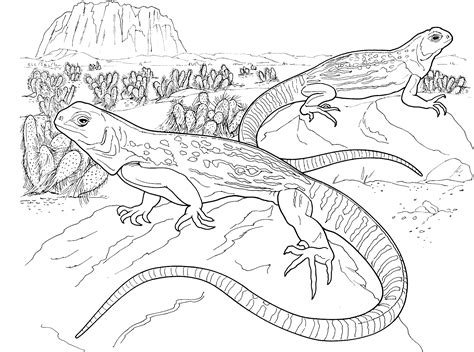 reptile coloring pages    print