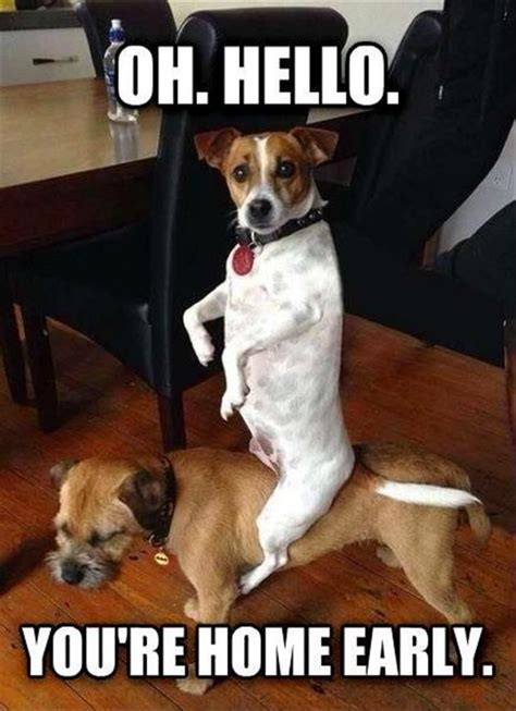 Hello Youre Home Early Dog Dog Memes Funny Animals