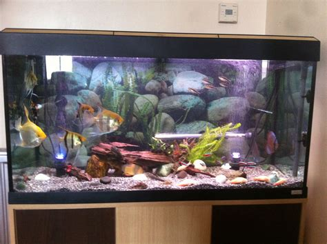 fish tank l reduced 200l tropical fish tank fishes southend
