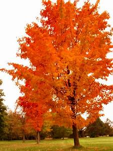 Soul, Amp, Psychedelic, Fall, Leaf, And, Tree, Photos, -, Autumn, Leaves, In, Motion