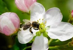 Bienen Und Wespen : gef hrlichste tiere australiens bienen und wespen tierheilkunde ~ Whattoseeinmadrid.com Haus und Dekorationen