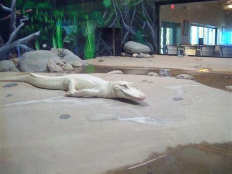 zoo wildlife aquarium park litchfield arizona az tripadvisor