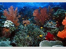 Download 7100 Wallpaper Pemandangan Bawah Laut Terindah Di Dunia Gratis