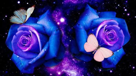 butterfly blue roses deborah butterflies wallpapers