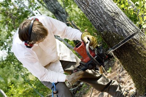 Man Cutting Down A Tree Stock Image. Image Of Cutting