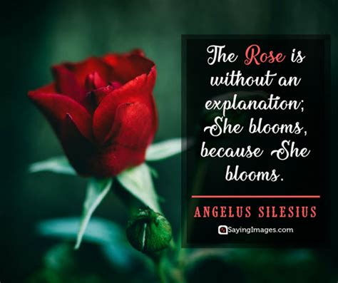 favourite flower rose essay  english impremedianet