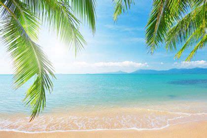tropical palm beach  print  wallpaper buc tranh tuong