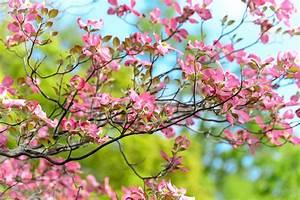 Schlanke Bäume Für Kleine Gärten : kleine g rten folge 2 b ume str ucher kraut r ben ~ Michelbontemps.com Haus und Dekorationen
