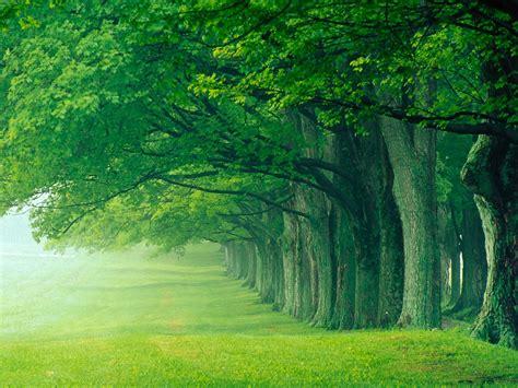 landscape lush summer louisville kentucky wallpapers hd