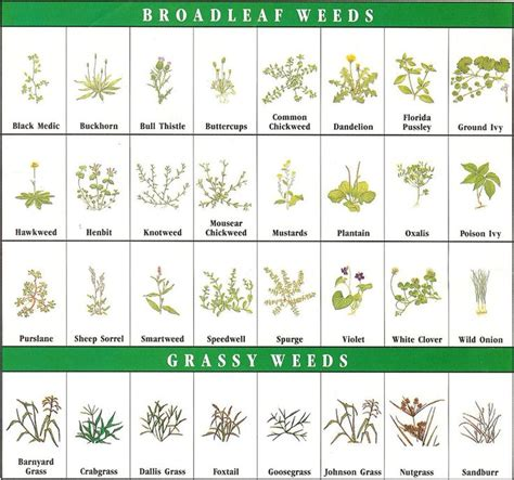 how to identify garden weeds weed identification chart garden ideas pinterest gardens nice and we