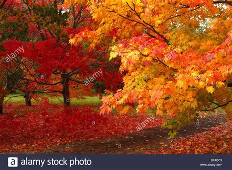 Leuchtend Rot Und Orange Blätter